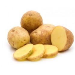copy of Ananas